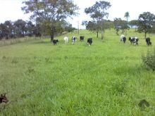 Fazenda com 146 ha em Camapuã