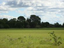 Fazenda com 4.632 hectares Nhecolandia