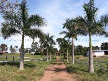 Fazenda 800 hectares pecuária culturão