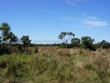 Fazenda com 5000 hectares Nhecolandia