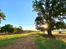 Fazenda 95 Hectares em Terenos a 1 km da BR 262