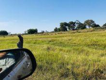 Fazenda com 5.000 hectares - Pantanal Coxim